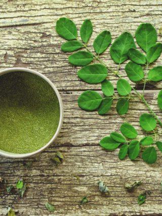 Le Moringa : le meilleur allié de votre organisme