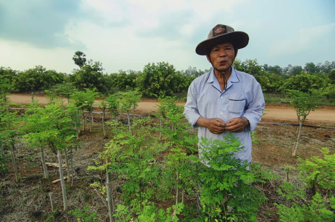 Monsieur Nero agriculteur au Cambodge anothertree sur culture de moringa