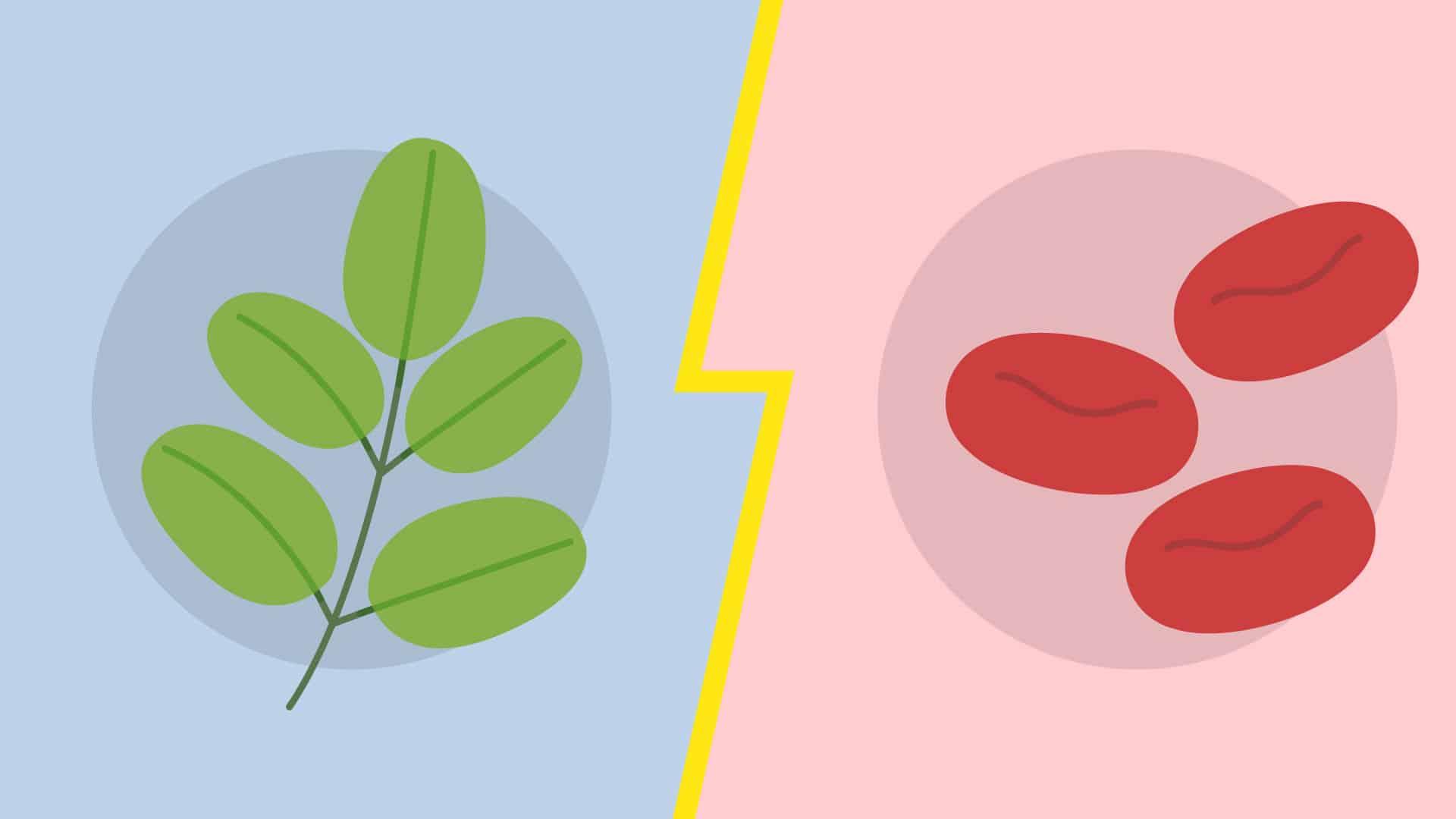 Le Moringa contre l'anémie
