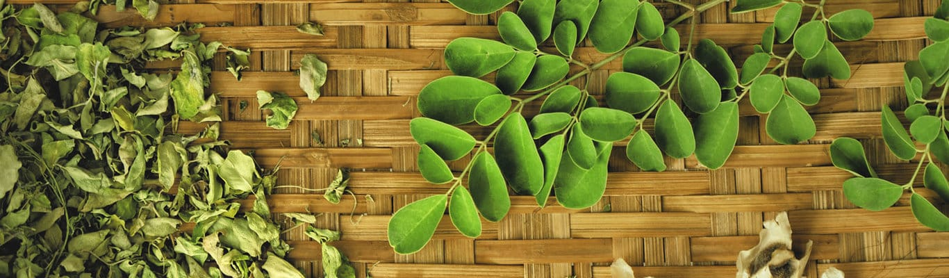 feuilles-moringa-3-formes-graines-feuilles-sechees-1366x400