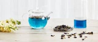 thé bleu fleurs de pois papillon
